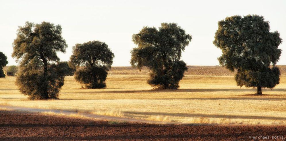Landschaft bei Almaguer